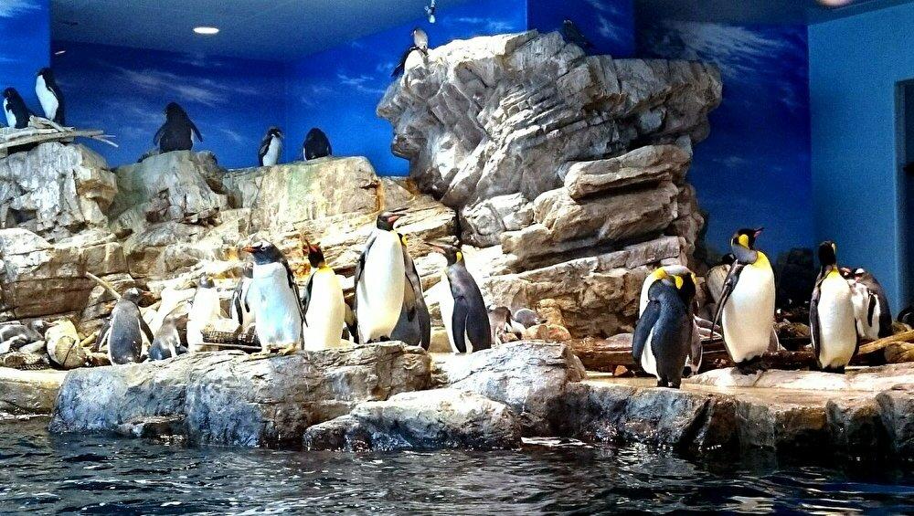 ペンギン村